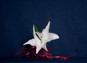 Ikebana Natale 2012