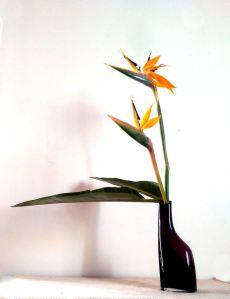 Ikebana by Rosaria Lenti