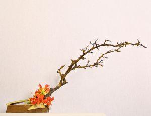 Ikebana di Luca Ramacciotti