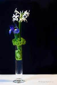 Ikebana di Rosanna Lari