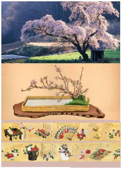 Scheda__Le piante e i fiori dell'Ikebana_-3