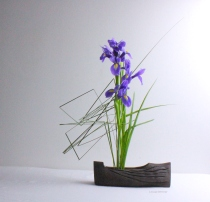 Louise Worner iris and steel grass 3